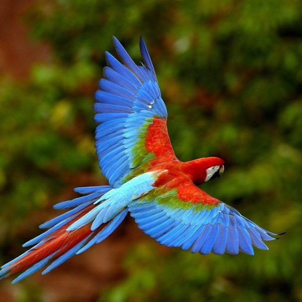 exoticbirds2